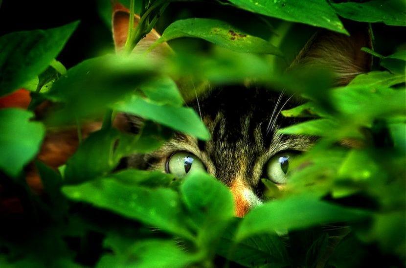 Gato entre las hierbas