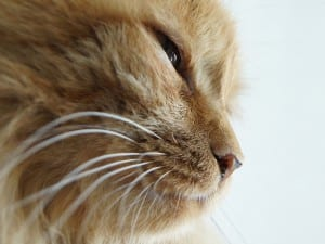 Mirada de gatito