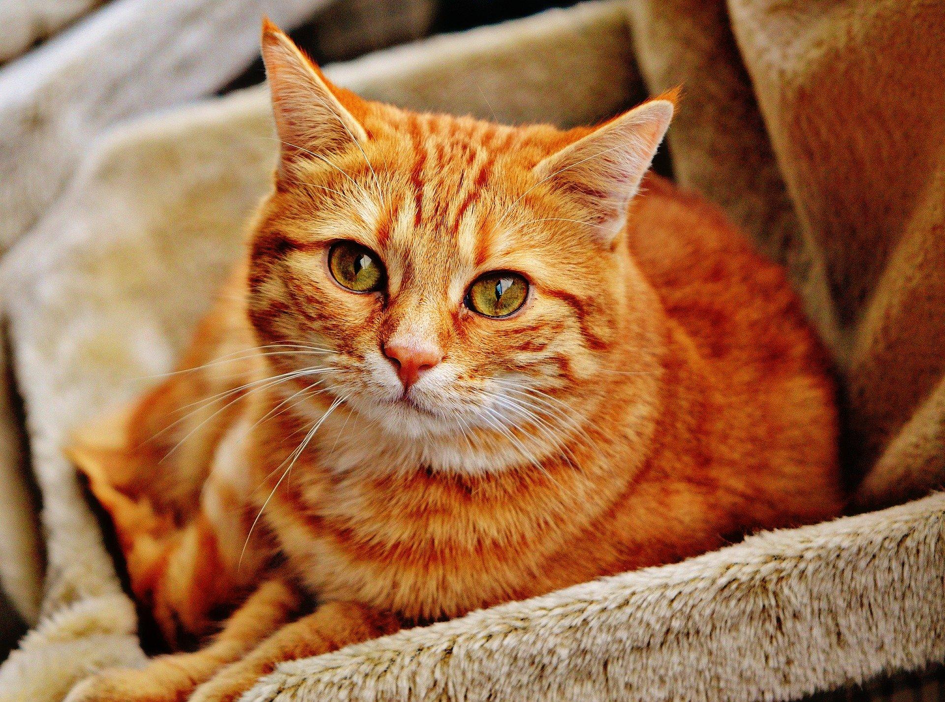 Un gato con una mirada tranqula
