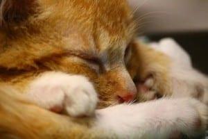 Gato durmiendo en la cama