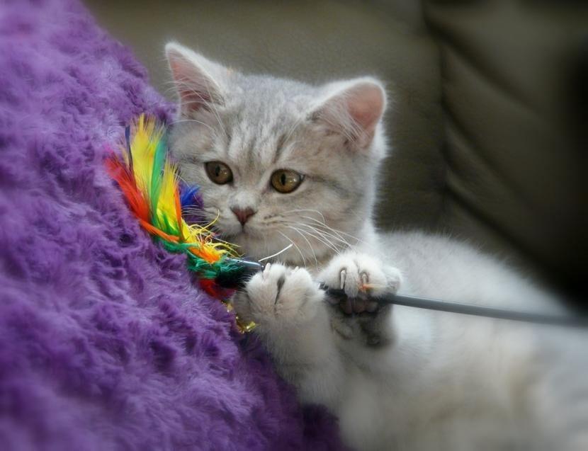 Gato jugando con plumero