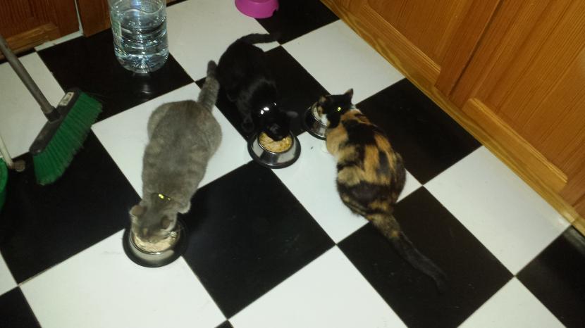Keisha, Benji y Susty