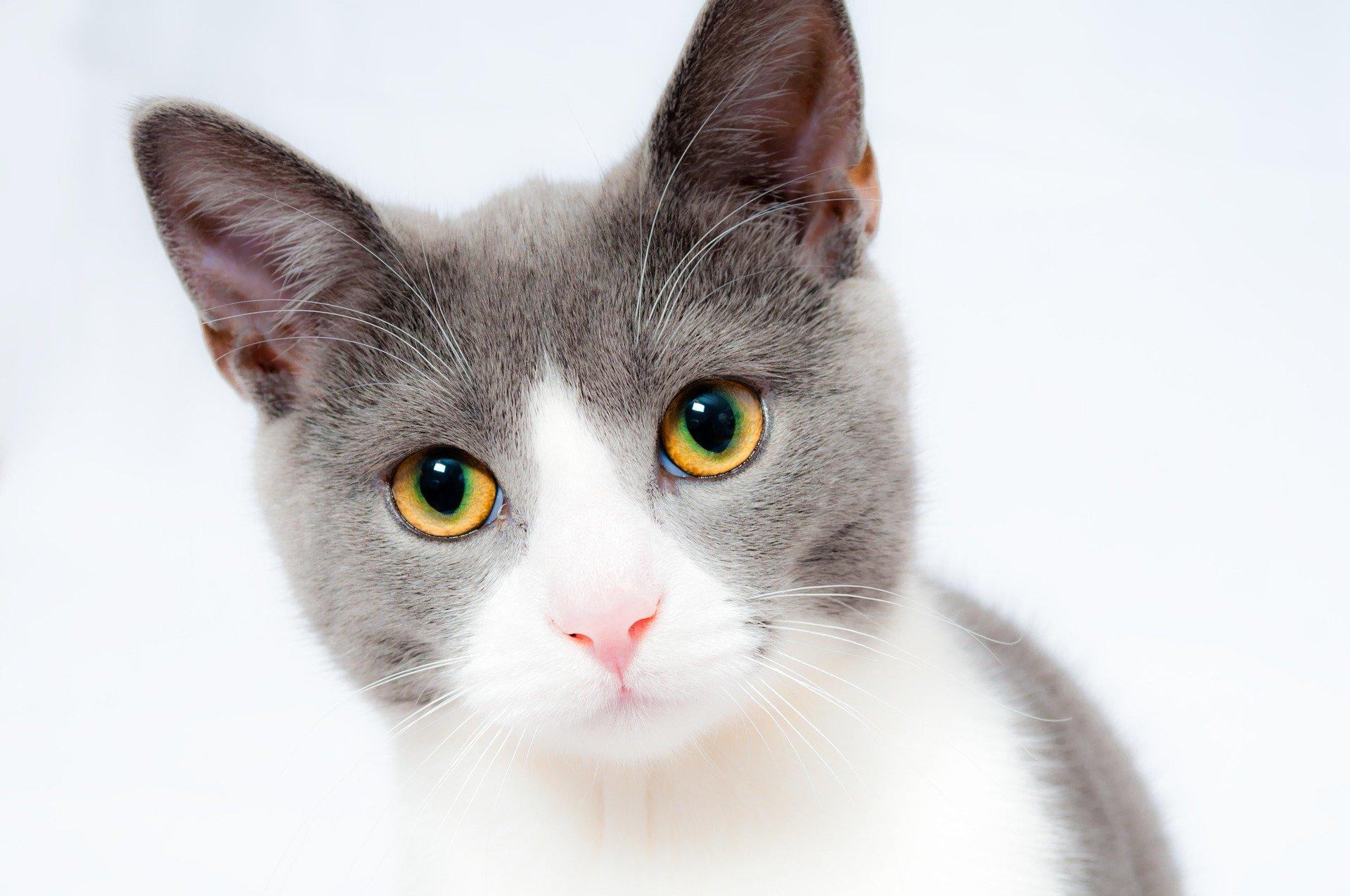 Ten paciencia para cuidar a tu gato adolescente