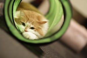Gato jugando en un túnel