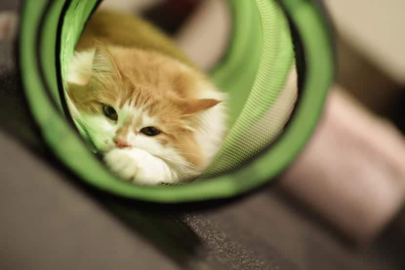 Gato jugando en un túnes