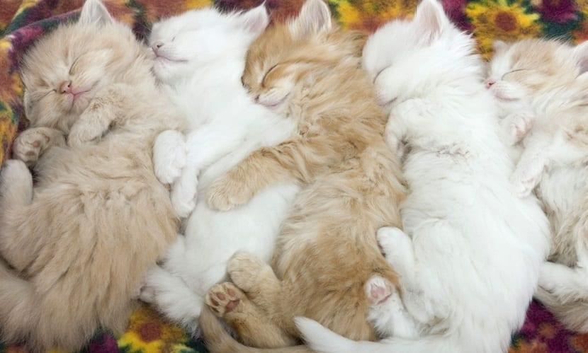 gatos sueñan