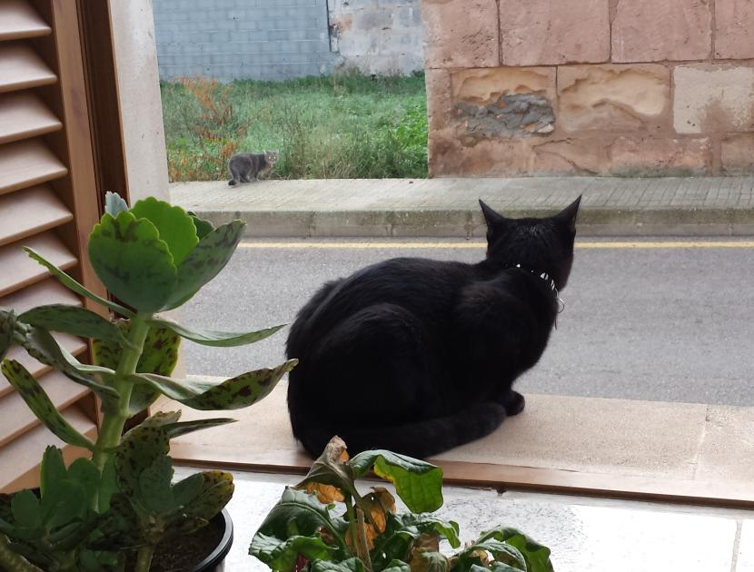 Benji en la ventana