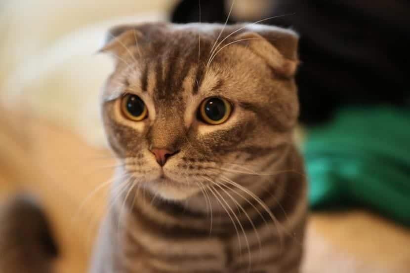 Gato con catarro