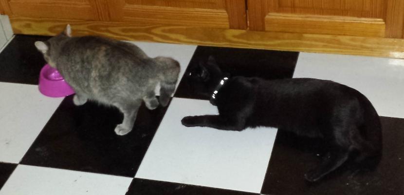 Benji y Keisha