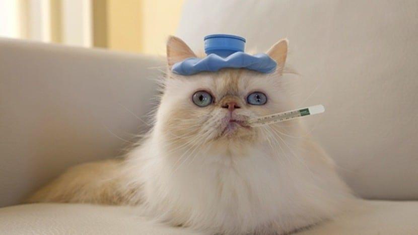 Gato resfriado