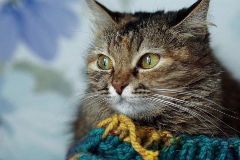 Gato con catarro bien abrigado