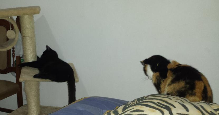 Benji y Susty