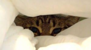 Gato escondido en la manta