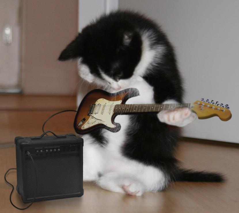 Gato rockero