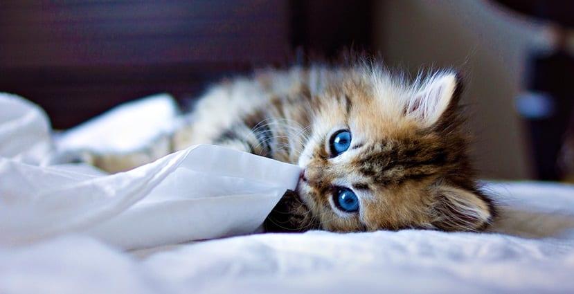 gatos y dulces