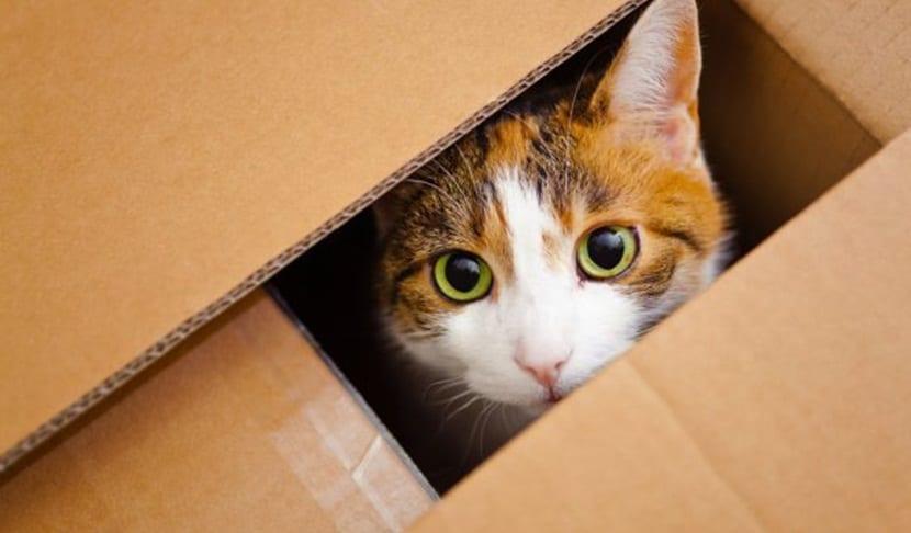 gatos-cajas carton