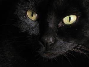 Ojos del gato negro