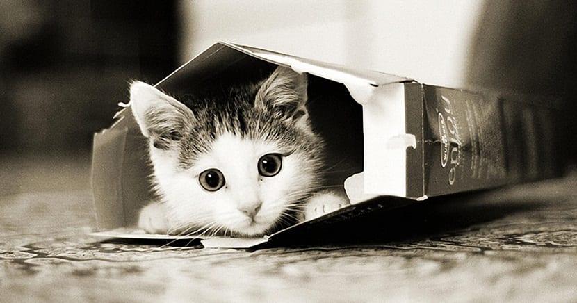razones cientificas gatos