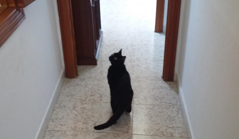 Benji mirando una mosca