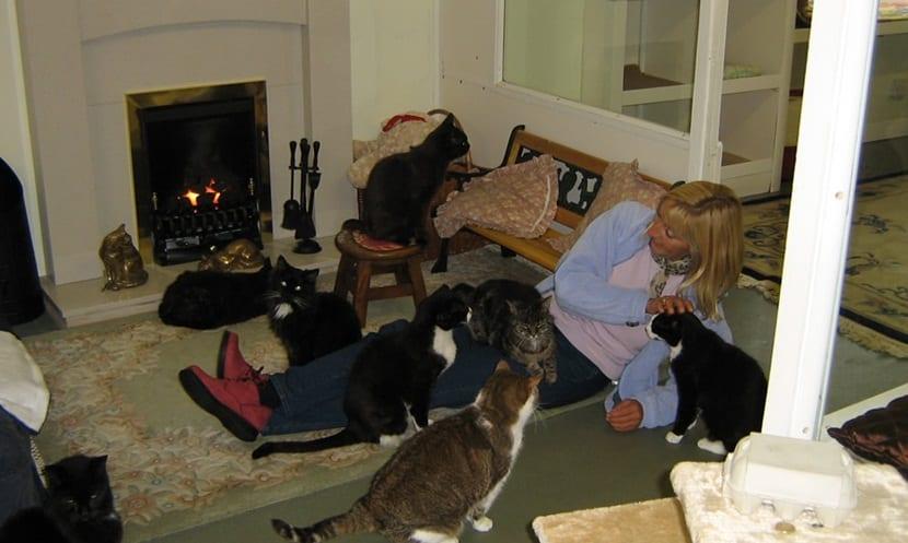 casa de retiro gatos