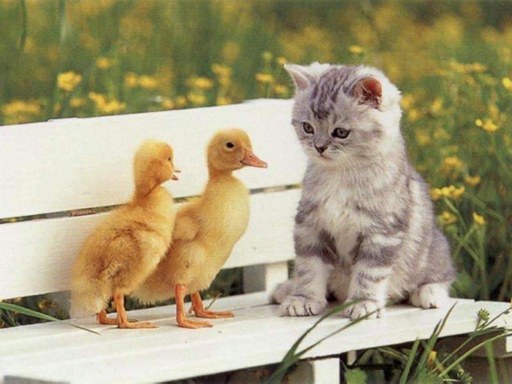 Gato con pájaros