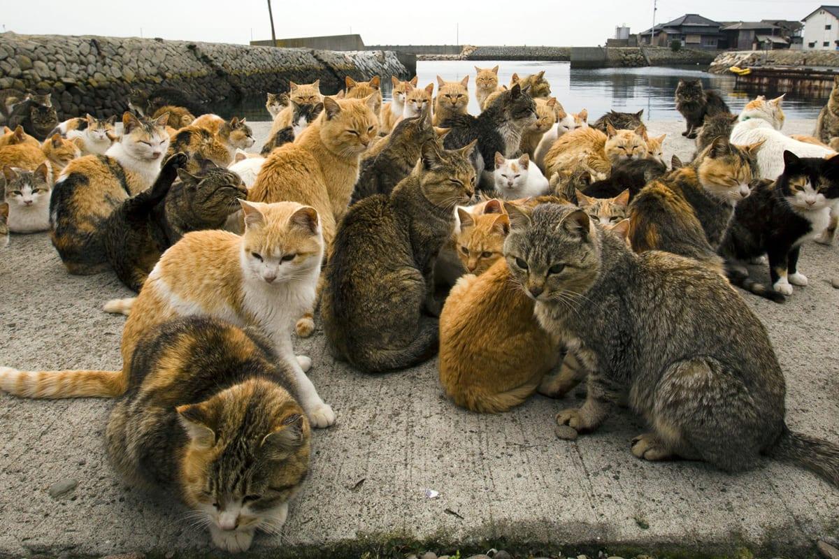 Gatos en Aoshima