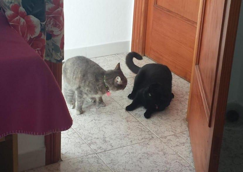 Keisha y Benji jugando