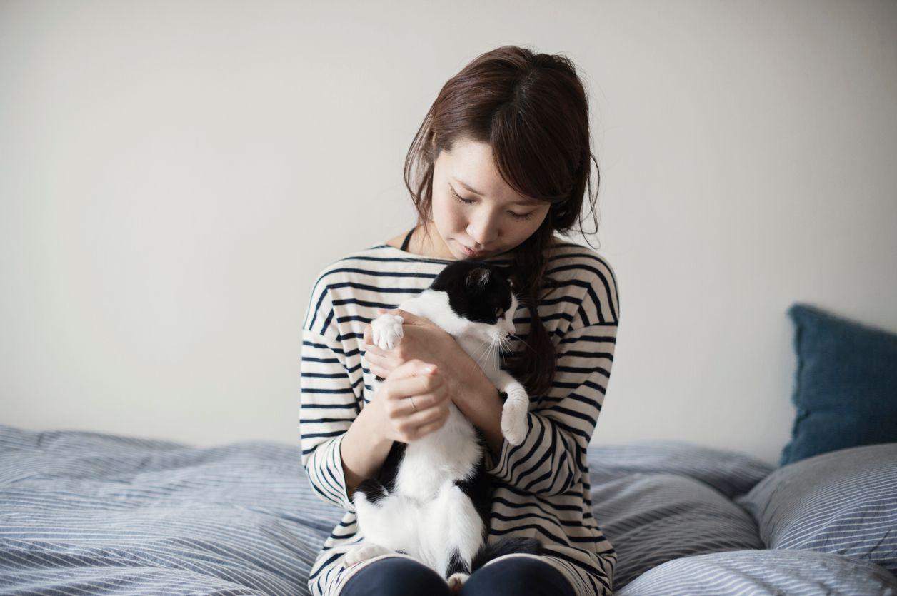 Los gatos son animales fáciles de mantener