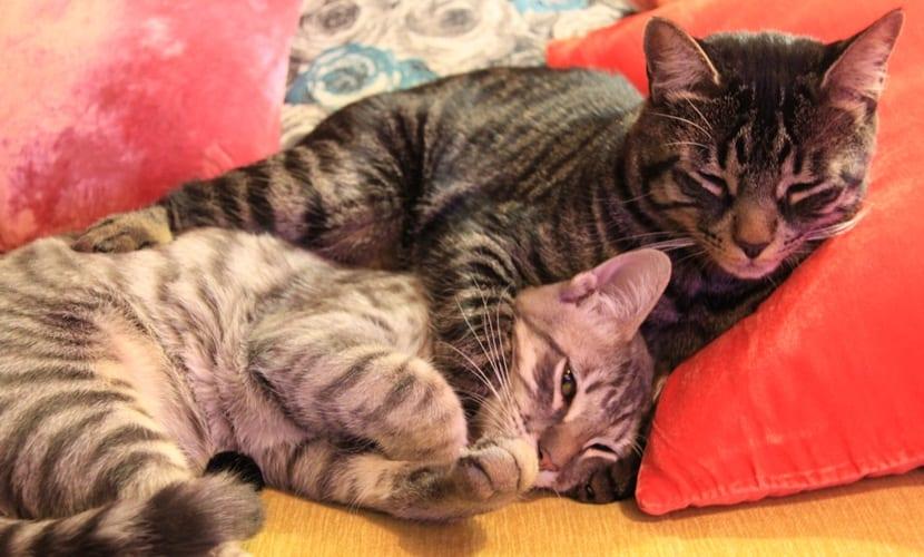 orina gatos