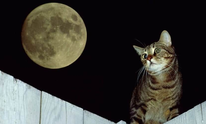 Gato y La Luna