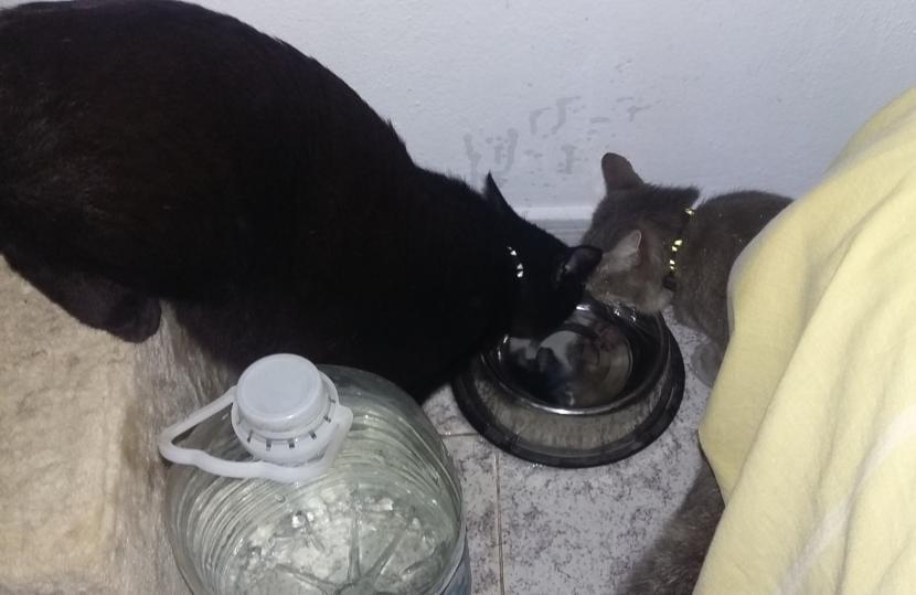 Benji y Keisha bebiendo