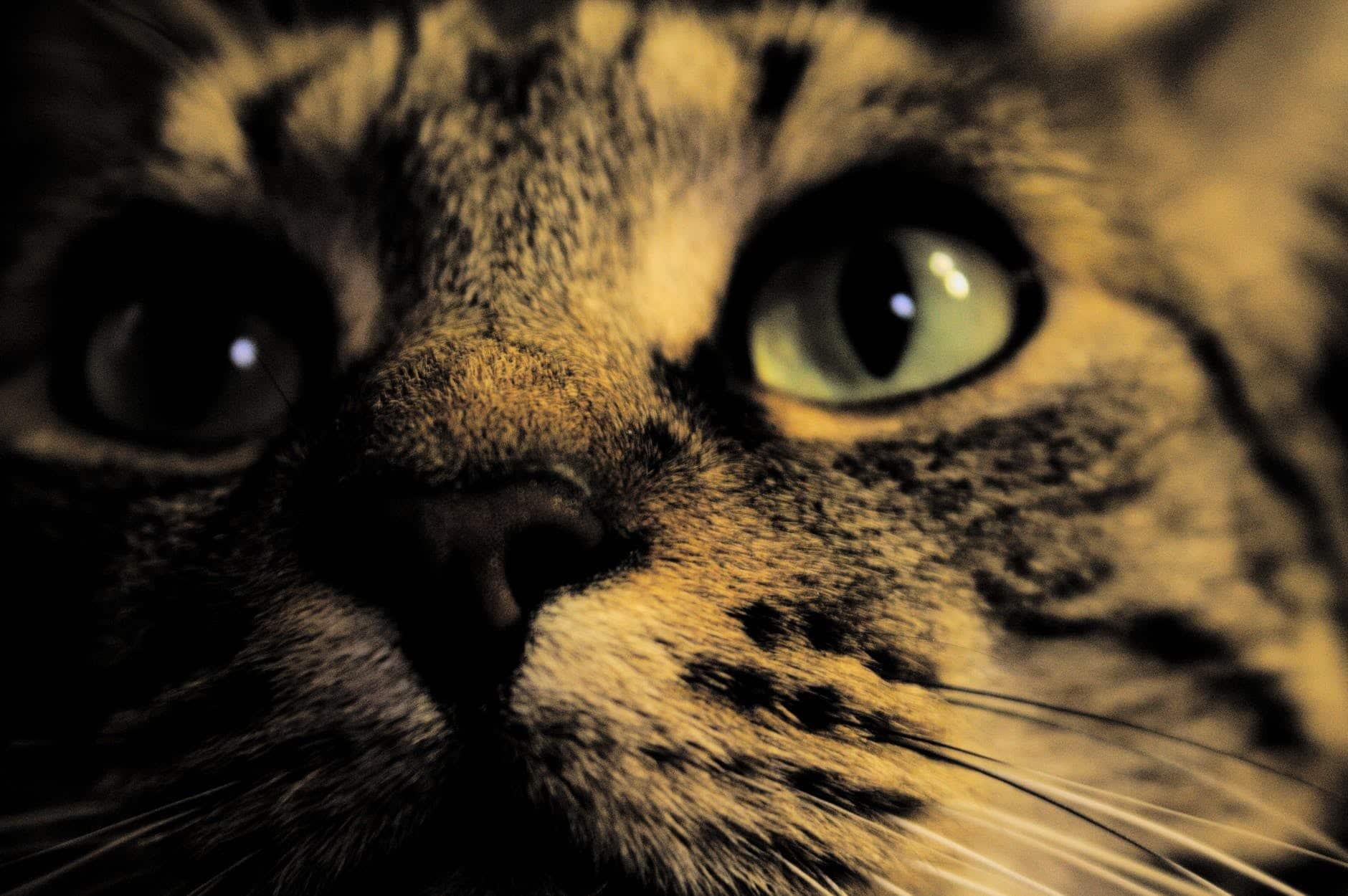 La lluna a veces influye en el comportamiento de los gatos