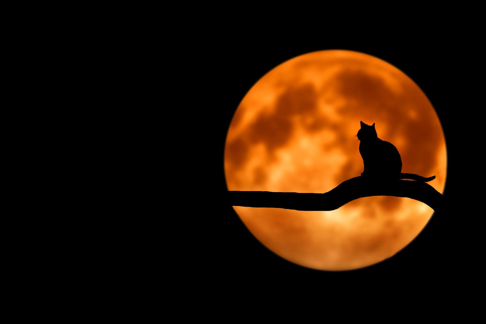 La luna llena puede influir en los gatos