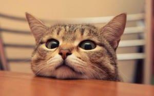 Gato en la mesa