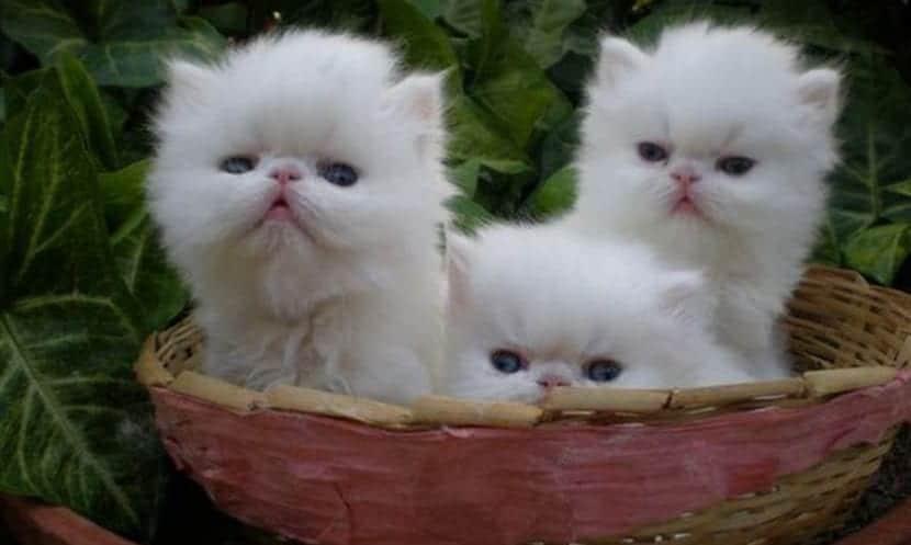 gatos beneficios
