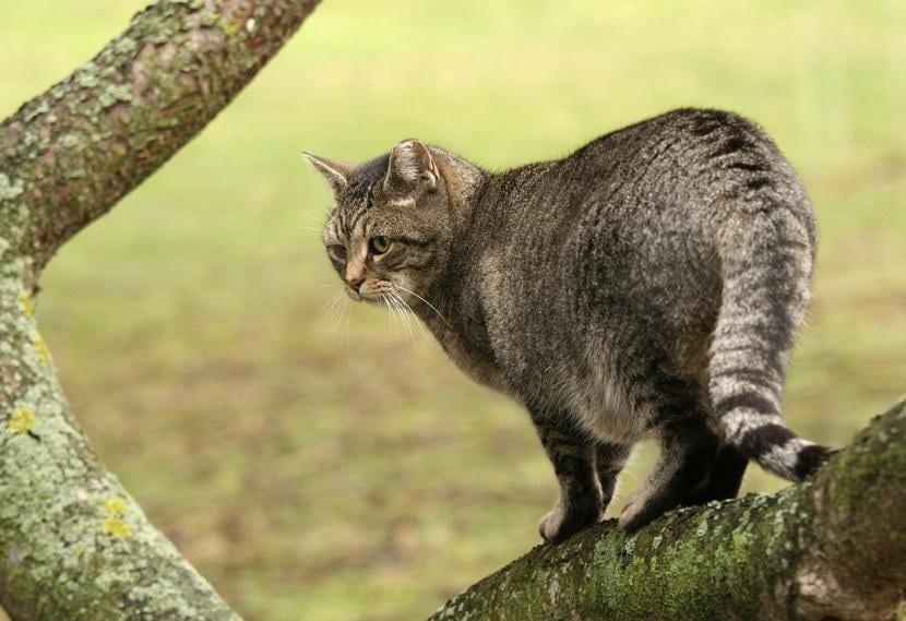 Gato protegido contra garrapatas