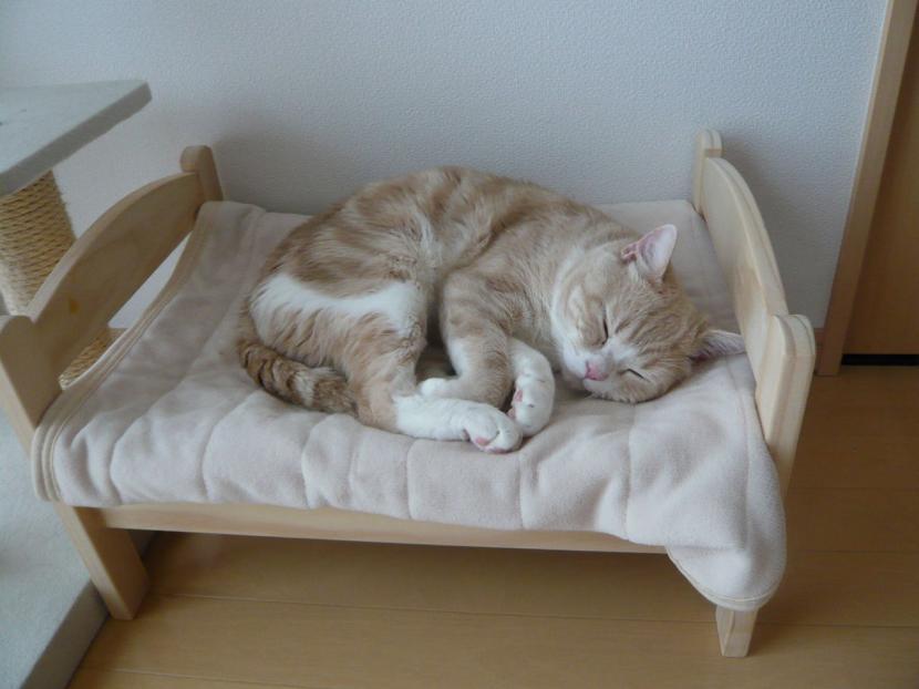 Camas para gatos for Cama para gatos