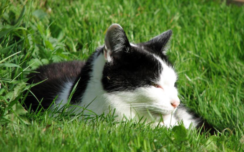 Gato tomando el sol