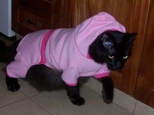 Gato vestido