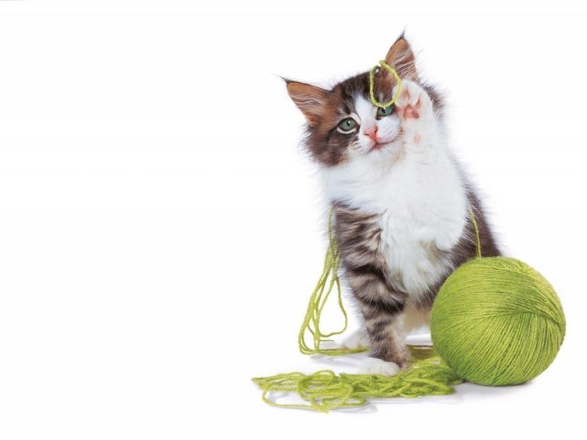 Gatio jugando con ovillo de lana