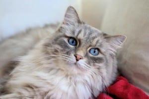 Gato pelo largo
