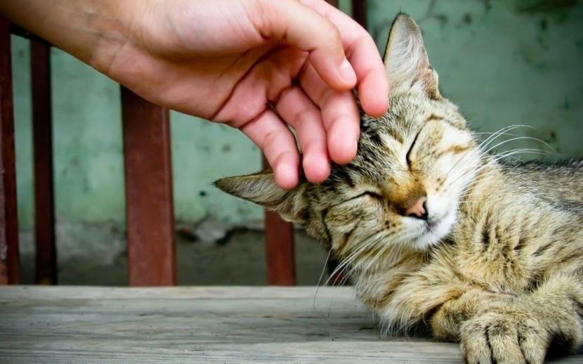 Gato siendo acariciado