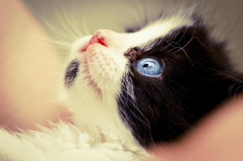 Gato pequeño con ojo inflamado