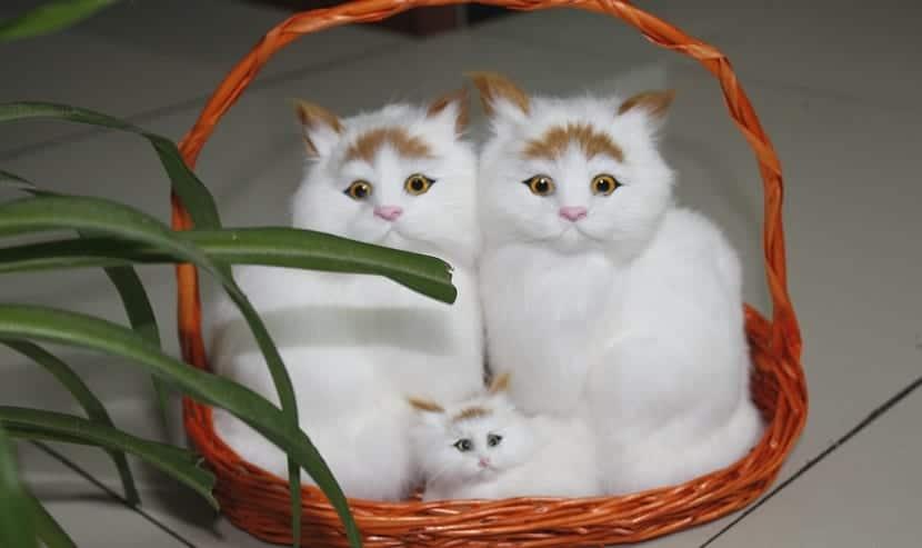 gatos hogar