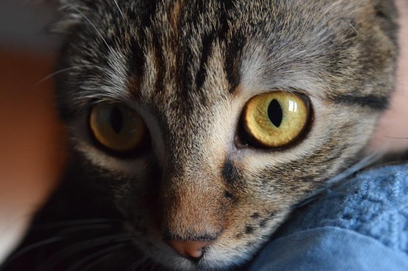 Ojo con gatos sanos