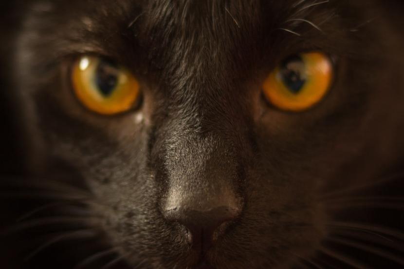 Gato con la pata vendada