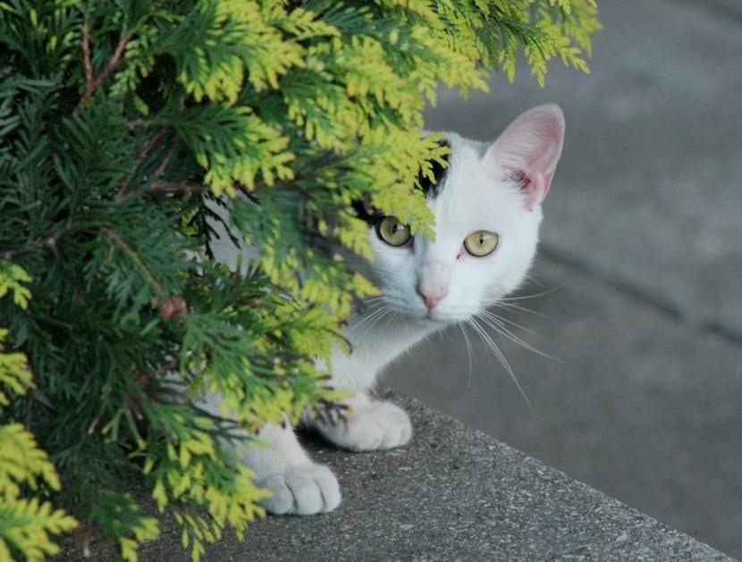 Gato callejero tras una planta