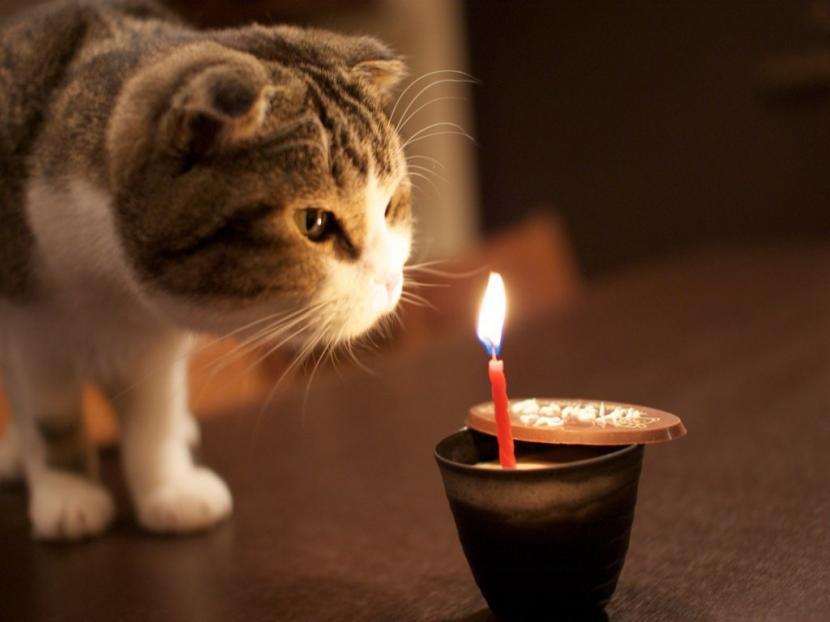 Gato_cumpleaños