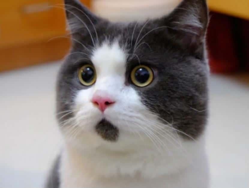Gato expresivo