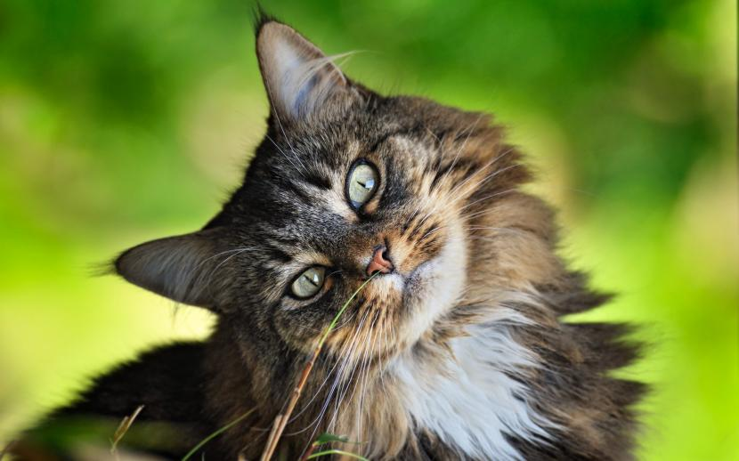 Gato oliendo hierba